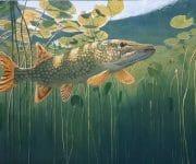 david miller fish in pond
