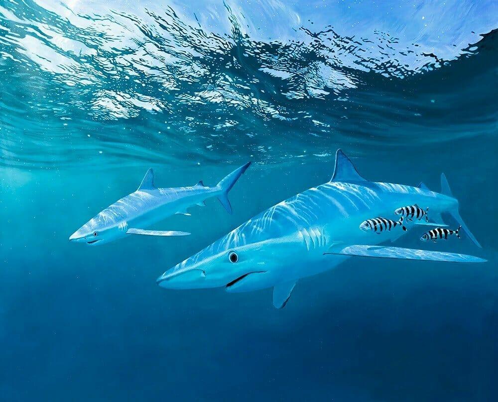 David Miller shark