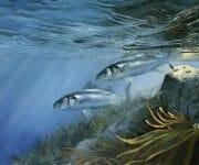 David miller fish underwater
