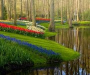 My favourite places in the keukenhof are the pools. Seeing the water reflecting the trees and flowers gives such a calm feeling. If you look closely you can see a gardener do his work. Because even with no people visiting the garden, the work goes on