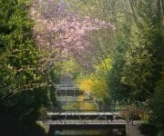 See-through along the walking bridges in the park with cherry blossoms on top