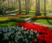 Sun peeking through the trees in the afternoon, with the lines and paths of flowers making harmony with each other