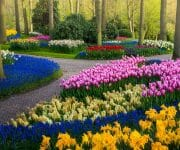The little paths make harmony with the trees and different flowers all around them