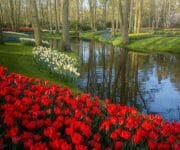 Zigzag lines of flowers, water, and paths almost looks like these scenes are dancing
