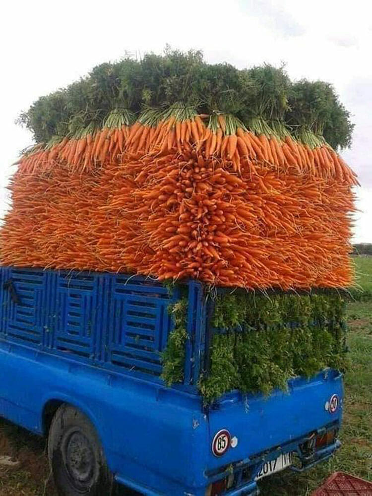 Beautifully stacked carrots in the back of a truck