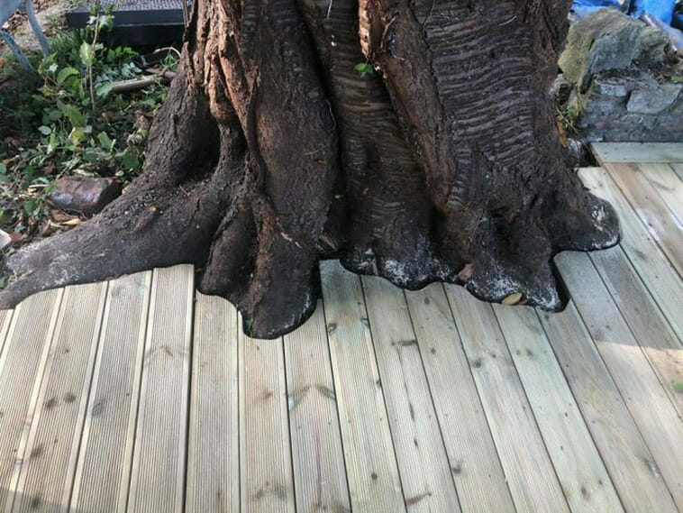 My dad laid new decking around an old tree!