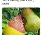 Spoiled fruit