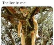 The lion in me the introvert